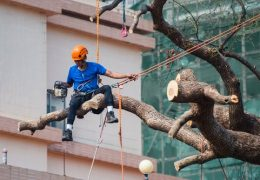 Here is why you should hire professionals to remove trees